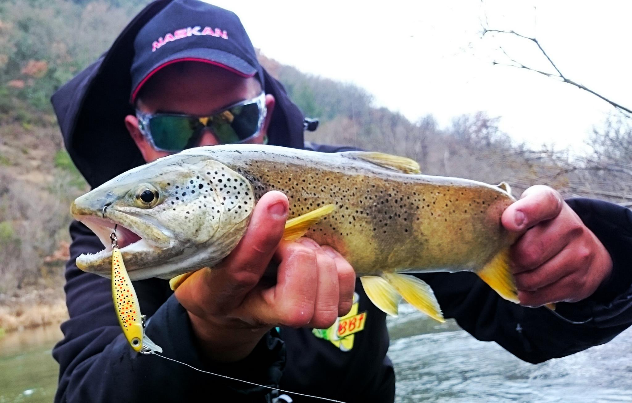 Truite Hd tout Brown trout